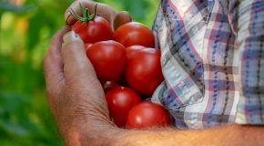 « Légumes bio » cultivés sous serre