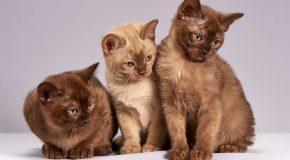 Une substance toxique pour les chats